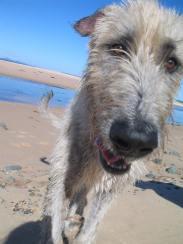 beach moke 010