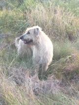 The Hound2
